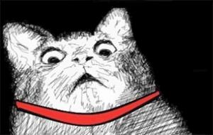yc_surprised-cat-gasp